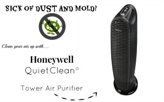 sick of dust and mold
