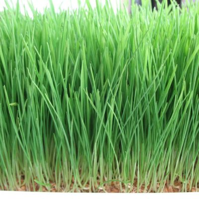 How Wheatgrass Is Helping You Stay Beautiful