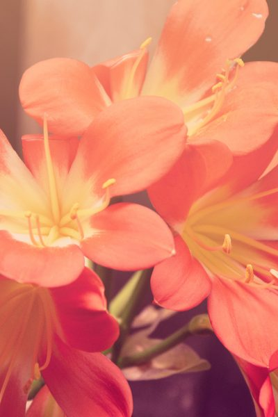 3 Delicious Things That Smell Like Spring