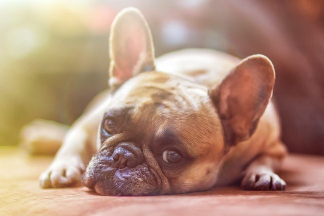 What To Watch Out For With Discount Pet Meds