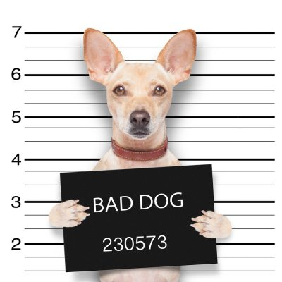 Is Your Dog's Behavior Threatening Your Home Life?