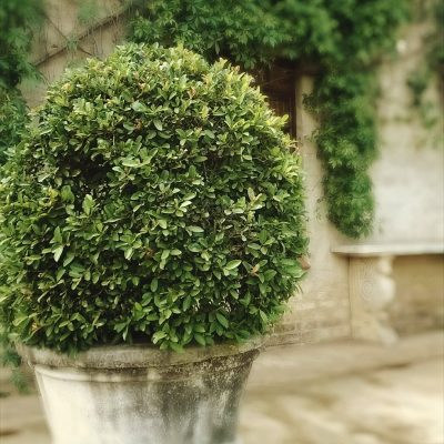 Landscaping Outdoors With Artificial Topiaries