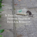 Is Your Property Value Dropping Because of Pests And Rodents?!