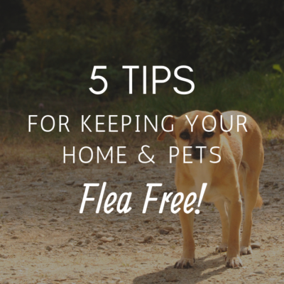 5 Tips for Keeping Your Home and Pets Flea-Free
