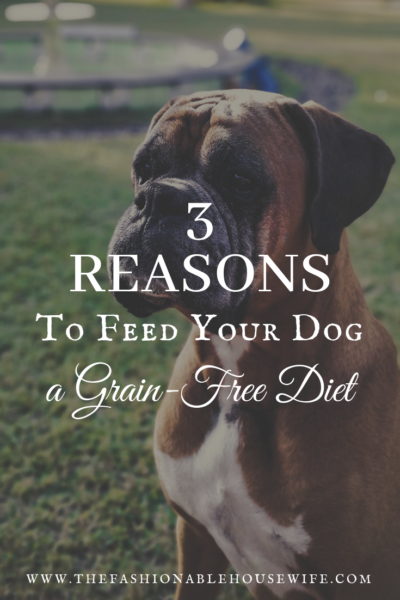 3 Reasons To Feed Your Dog A Grain Free Diet