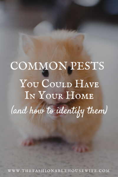 Common Pests You Could Have in Your Home (And How to Identify Them)