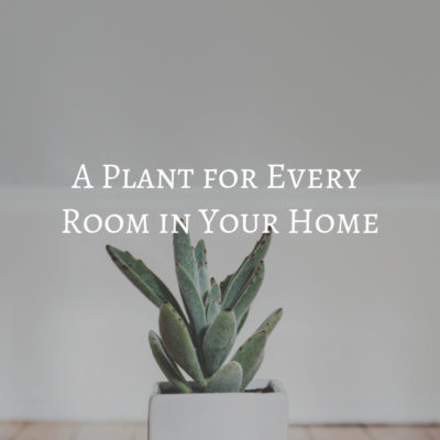 A Plant for Every Room in Your Home