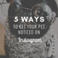 5 Ways to Get Your Pet Noticed on Instagram