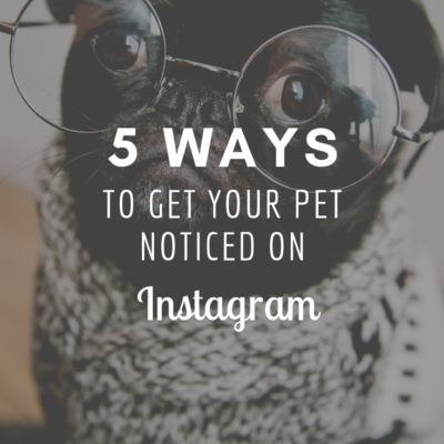 5 Ways to Get Your Pet Noticed on Instagram