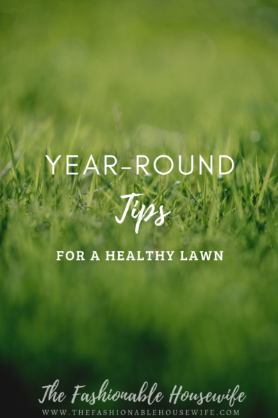 Year-Round Tips For A Healthy Lawn