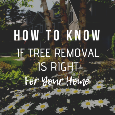 How To Know If Tree Removal Is Right For Your Home