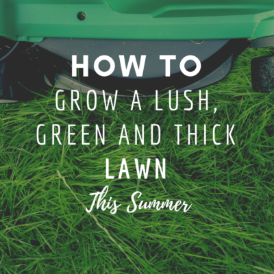 How To Grow a Lush, Green and Thick Lawn This Summer