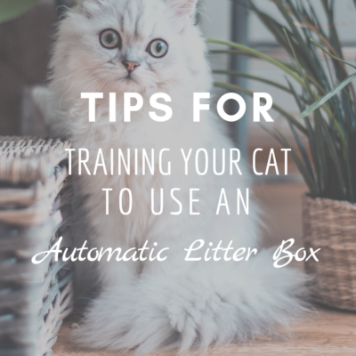 Tips For Training Your Cat To Use an Automatic Litter Box