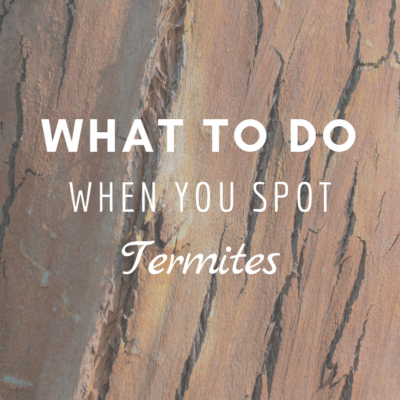 What To Do When You Spot Termites