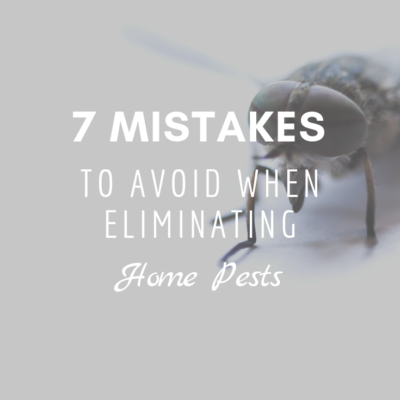 7 Mistakes to Avoid When Eliminating Home Pests
