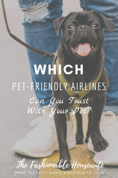 Which Pet-Friendly Airlines Can You Trust With Your Pet?