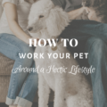 How To Work Your Pet Around a Hectic Lifestyle