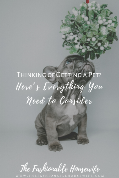 Thinking of Getting a Pet? Here's Everything You Need to Consider