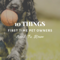 10 Things First Time Pet Owners Need To Know