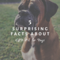 5 Surprising Facts About CBD Oil for Dogs
