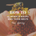 How To Eliminate Wasps and Their Nests This Spring