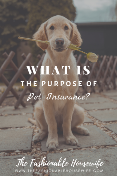 What's The Purpose of Pet Insurance?