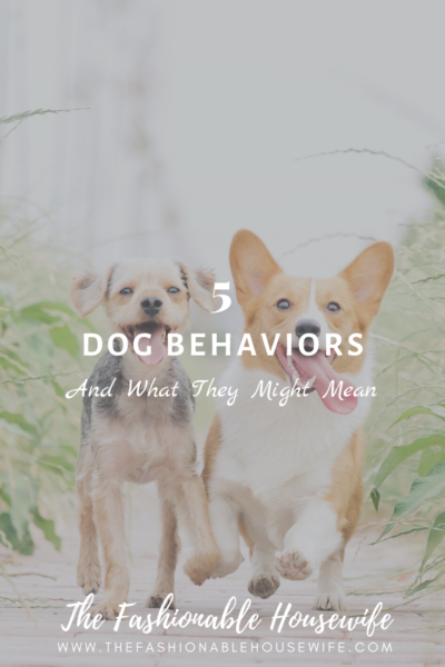 5 Dog Behaviors and What They Might Mean