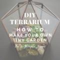 DIY Terrarium: How To Make Your Own Tiny Garden