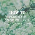 How To Deal With Common Pests in Your Home & Garden