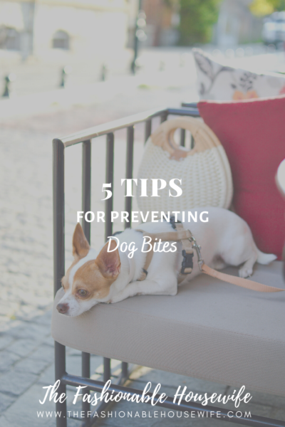 5 Tips For Preventing Dog Bites