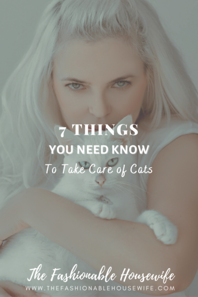 7 Things You Need Know To Take Care of Cats