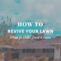 How To Revive Your Lawn When It Looks Dead & Gone