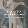 How To Take Care Of The Animals During Pandemic