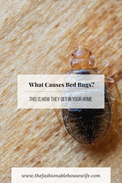 What Causes Bed Bugs? This Is How They Get in Your Home
