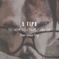 5 Tips to Help You Take Care of Your Senior Dog