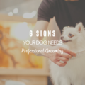 6 Signs Your Dog Needs Professional Grooming