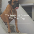 The Benefits of Calcium For Your Dog