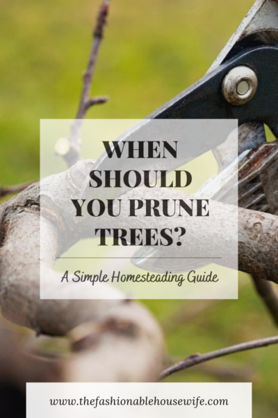 When Should You Prune Trees? A Simple Homesteading Guide