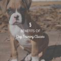 5 Benefits Of Dog Training Classes
