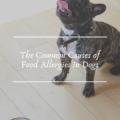 The Common Causes of Food Allergies in Dogs