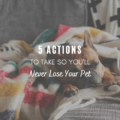 5 Actions to Take to Never Lose Your Pet