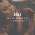 What CBD Oil Can Do For Your Anxious Pets