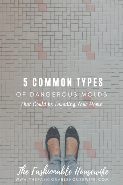 5 Common Types of Dangerous Molds That Could be Invading Your Home