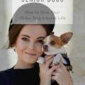 Senior Dogs: How to Give Your Older Dog a Great Life
