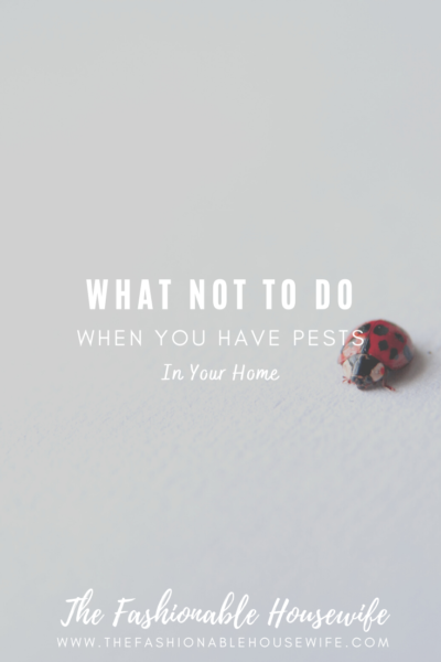 What NOT To Do When You Have Pests In Your Home