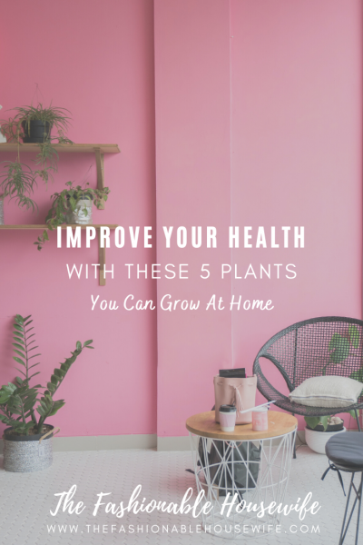 Improve Your Health With These 5 Plants You Can Grow At Home