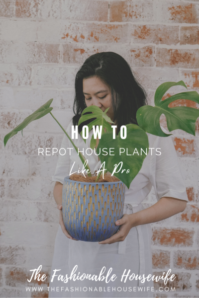 How To Repot House Plants Like A Pro