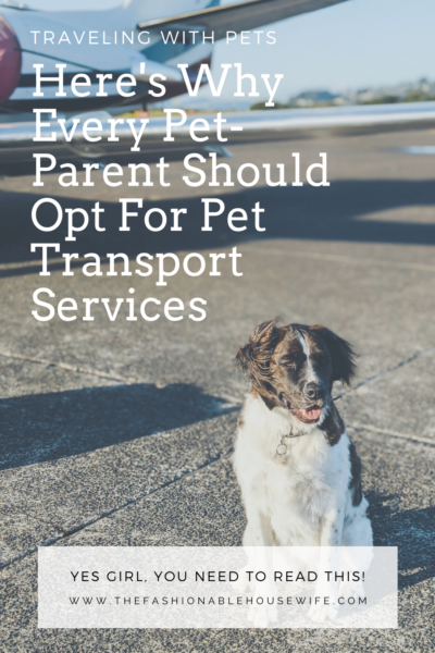 Traveling With Pets: Here's Why Every Pet-Parent Should Opt For Pet Transport Services