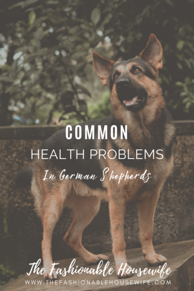 Common Health Problems in German Shepherds And How To Fix Them