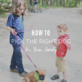 How to Pick the Right Dog for Your Family